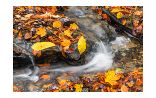 Colorful fall leaves in a brook